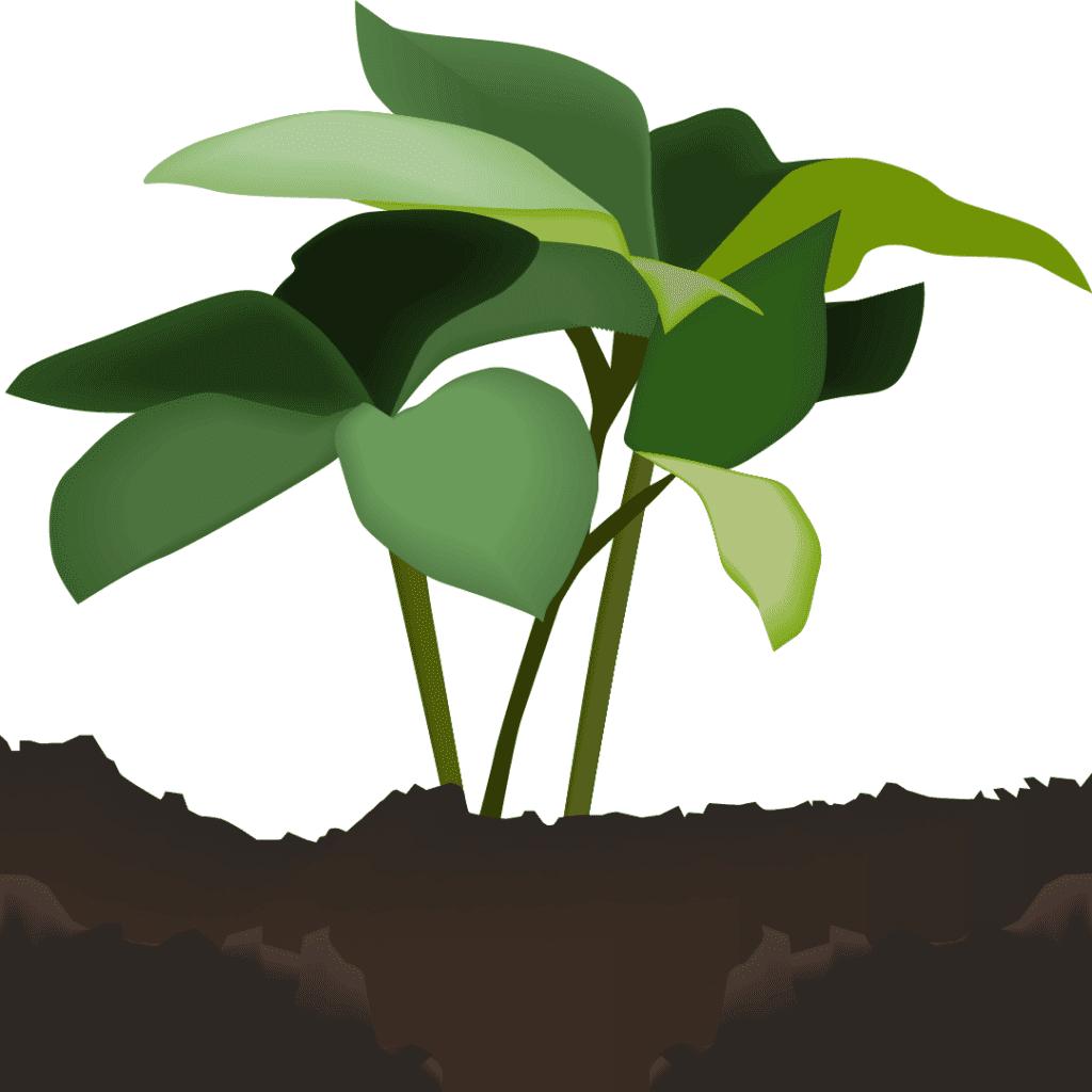 Les plantes dans votre entreprise impactent le travail de vos salariés